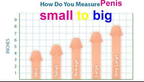 penis sizes in inches