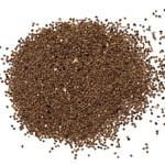 cuscuta-seed