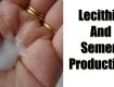 Lecithin And Semen Production